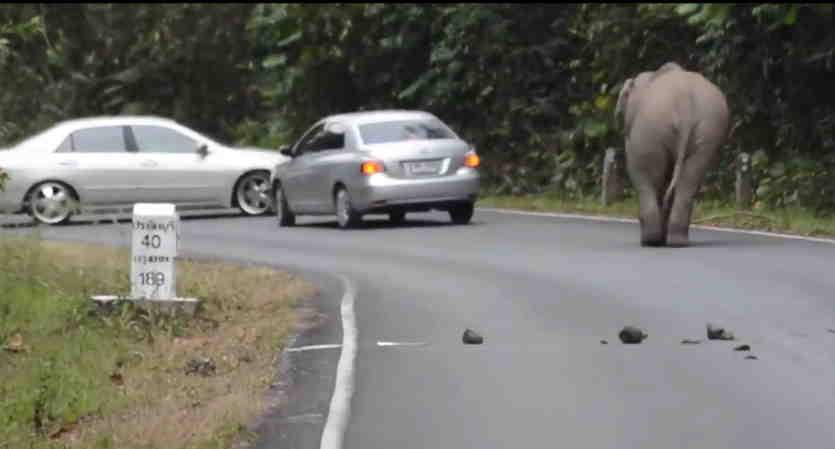 slon inomarka