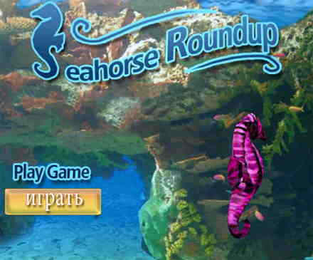 Sea horse adventures