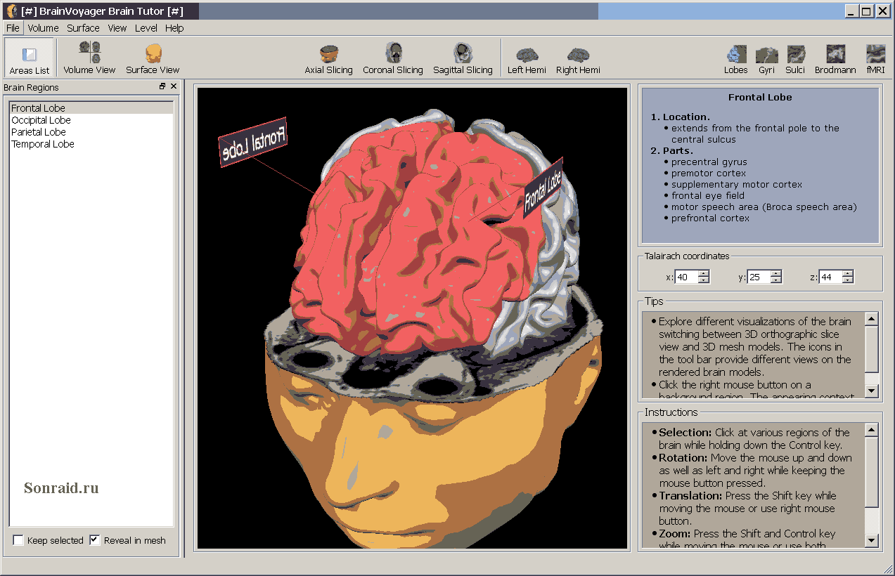 BrainVoyager Brain Tutor 2.5